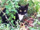 Хватай и беги – реакция кошки-мамы на опасность! Но я для неё не опасна, и она мне поверила.