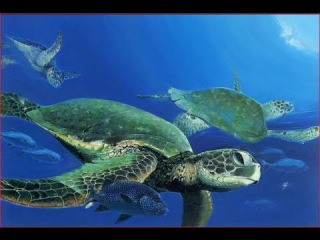 Wild Discovery Channel Animals - Tortoises and Sea Turtles Documentary BBC - Animal planet 2016