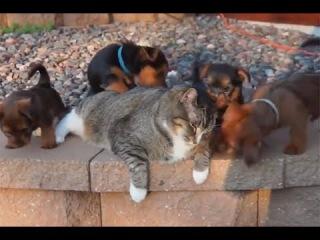Смешные животные Приколы про животных 2017 #2 (Funny animals 2017 – смешные звери)