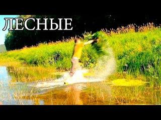 Ловушка для рыбы - КАПКАН ИЗ ТРАВЫ | Grass Fish Trap