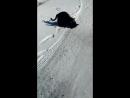 Кошачье хом видео
