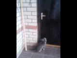 как кот открывает двери