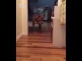 Пес боится разбудить друга
