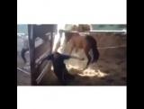 Ударила Лошадь
