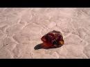 Путешественник - короткометражный фильм,фантастика HD gentitcndtyybr - rjhjnrjvtnhf;ysq abkmv,afynfcnbrf hd