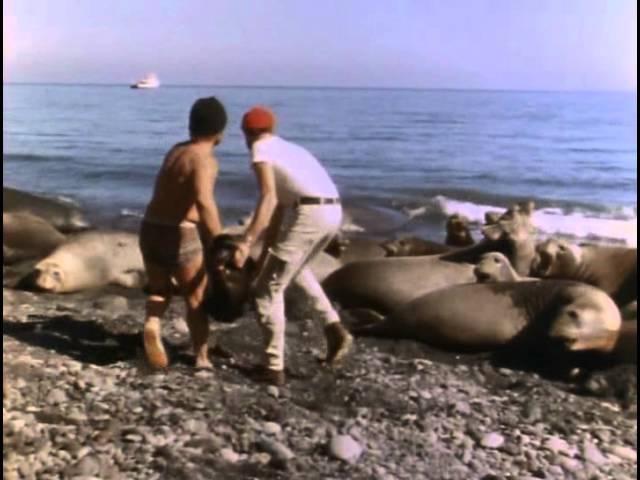 9 - Одиссея Жака Кусто - Возвращение морских слонов 9 - jlbcctz ;frf recnj - djpdhfotybt vjhcrb[ ckjyjd
