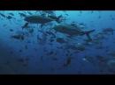 Королевство океанов 2011 Фильм Первый HD