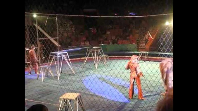 львы взбесились в цирке на 3 минуте жесть начинается