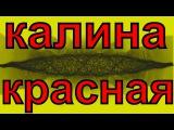ПЕСНЯ - КАЛИНА КРАСНАЯ  Шикарное исполнение песни  Лучшая народная песня