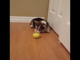 Первое знакомство с мячиком (VHS Video)