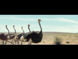 Музыка из рекламы Samsung - Ostrich (2017)