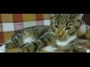 Кот и Дом СЕРАФИМ Приют для кошечек Архангельск Северодвинск