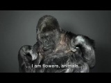 Koko the gorilla has something to say to you!
