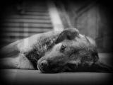 Валентин Гафт - Пёс