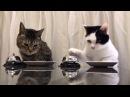 Коты поторапливают рабов, чтобы те побыстрее принесли им еды