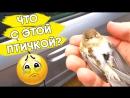 Птичка попала в ловушку и её решили спасти