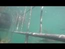 South Africa, Gansbaai Shark Alley vid. 4