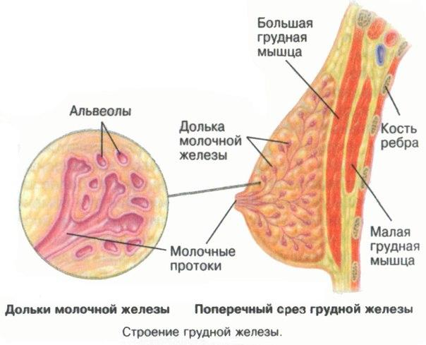 боль в молочной железе после удаления фиброаденомы