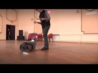 На Урале собака, танцующая тверк, прошла первый отбор на шоу