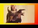 Смешное видео про кошек котят Прикольные смешные кошки Создай себе хорошее наст...