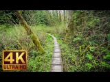 Walking in the Woods. Episode 2 - 1.5 HRS - Virtual Hike, Relaxing Sound of Nature 4K Video
