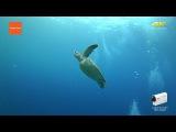 Action Cam Underwater Exploring in Palau - 4K Sony