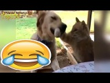 Я так давно не СМЕЯЛСЯ смешные СОБАКИ   I have not LAUGH funny dog