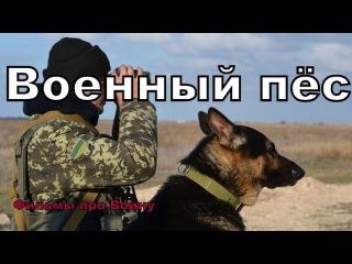 """Новые военные фильмы 2017 """" Военный пёс """" Русские фильмы о Великой Отечественной ..."""