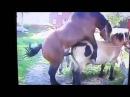 Секс животных! Вот так то!