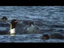 04 BBC Голубая планета Замёрзшие моря