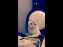 Ева - кот из шрека 😆