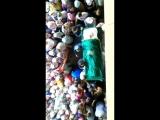 Похороны Хании Фархи