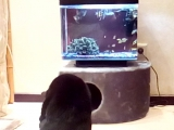 Купил аквариум, теперь у кошки есть свой телевизор