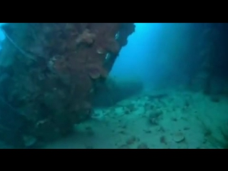 Акулы-няньки