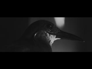 Ассаи – Унижать и любить, 2016