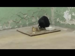 кошак ест