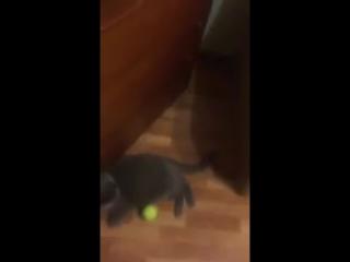Как я играю с котом