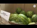 Нитратные арбузы в супермаркете Липецка