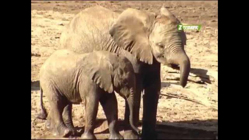 Животный мир Африки Тайная река бабуинов Документальный фильм