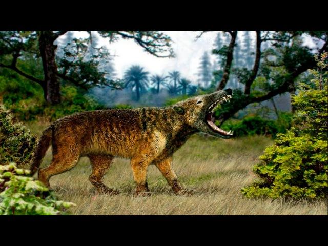 Доисторические Хищники: Челюсти как Бритва. Гиенодон \ National Geographic HD