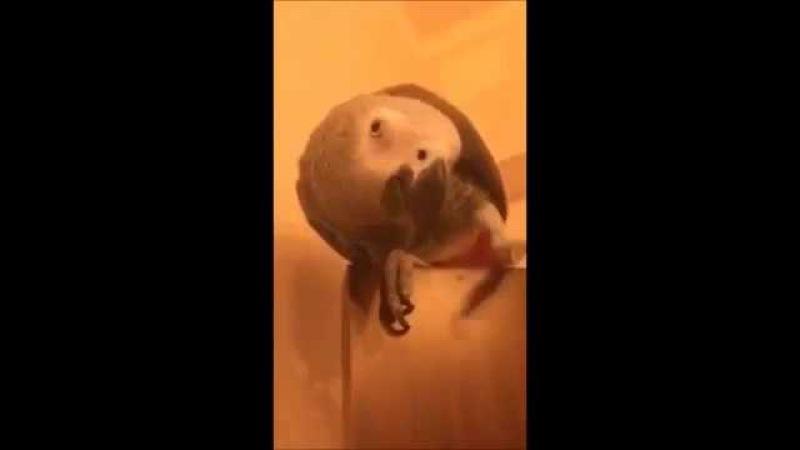 Умный Попугай