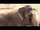 Гиганские слоны в Тюмени Развлечения для детей entertainment for kids Funny kids Video