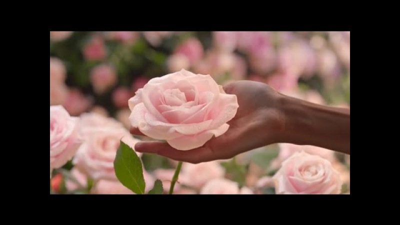 🌹💖 Happy Women's Day 💖🌹 (When You Tell Me That You Love Me) 💖🌹