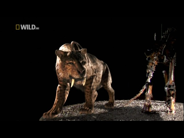 Доисторические хищники. Саблезубый Тигр. HD