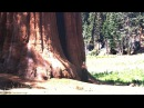 Deya Dova Recording In A 3000 Year Old Tree Free Download