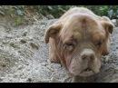 Из земли торчала голова собаки, но что было дальше поразило всех