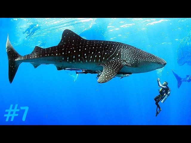 Филиппины: китовые акулы Себу, каньонинг и паром на Бохол \ Philippines Cebu Bohol travel