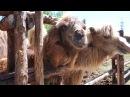 Ксюша Ксения в зоопарке где много животных медведи львы верблюды ламы страус