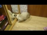 Страшный зверь живёт в зеркале:)))) Илиана - дочка Ёлки и Адмирала
