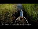 Sufix 832 Advanced Superline Trailer